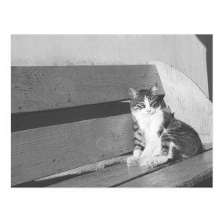 Севастополь кошки post cards