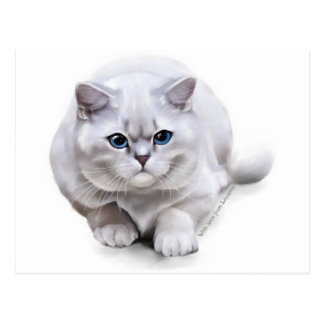 Сat breed British Shorthair Postcard