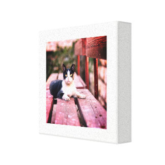 Тhe cat lies on the bench canvas print