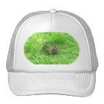ℑм℘ґℯṧṧї♥℮ hat