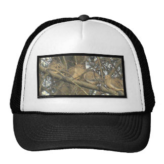 ℑм℘ґℯṧṧї♥℮ mesh hats