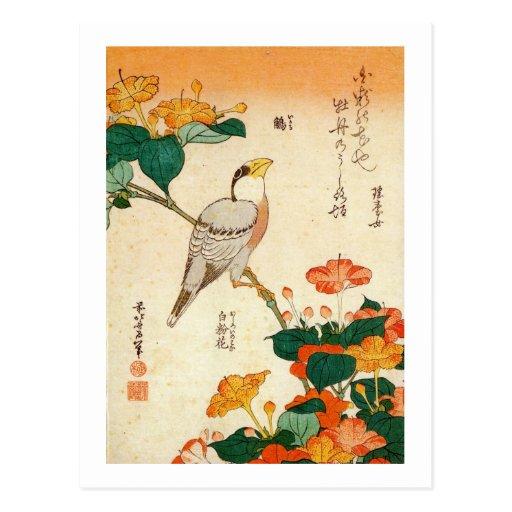 オシロイバナに小鳥, 北斎 Bird and Mirabilis Jalapa, Hokusai Postcard