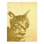 キジ猫ポストカード 葉書き