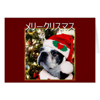 メリークリスマス  Christmas Boston terrier Card