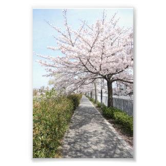 京都 花見 桜 Kyoto Kamogawa Sakura. Hanami Print Photo Print
