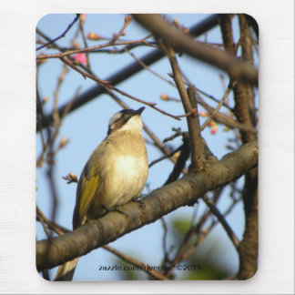 白頭翁Chinese Bulbul Bird On Cherry Branches Mouse Pad