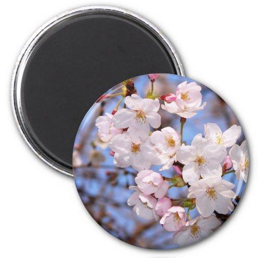 神戸にある桜開花の作品 IMÁN REDONDO 5 CM
