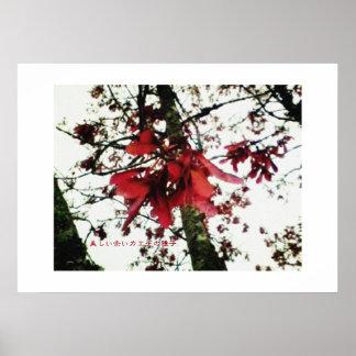 美しい赤いカエデの種子 POSTER