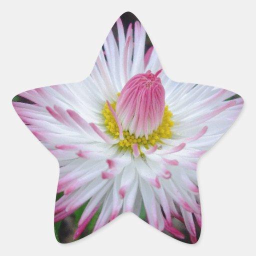 000011 - Margarita rosada Calcomania Cuadrada Personalizada