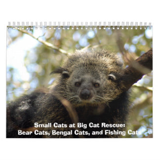 002Bearcat, pequeños gatos en el rescate del gato  Calendarios
