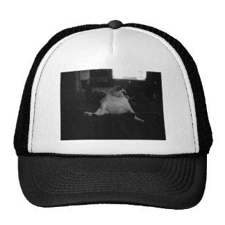 003 TRUCKER HATS