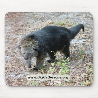 003Bearcat Mouse Pad