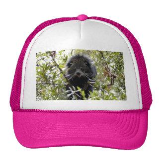 004Bearcat Hat
