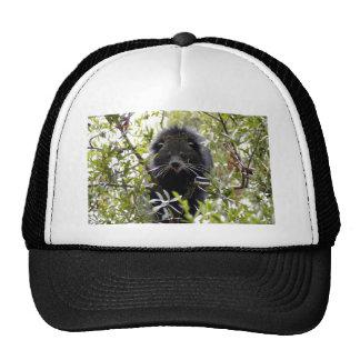 004Bearcat Trucker Hat