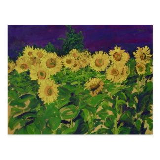 0067-le champ des tournesols postcard