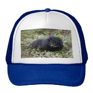 008Bearcat-edt Trucker Hat