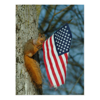 010510-4-APC   ONE PATRIOTIC SQUIRREL POSTCARD