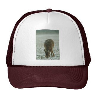010611-7H TRUCKER HAT