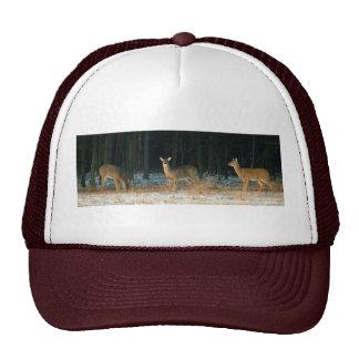 010811-54H MESH HATS