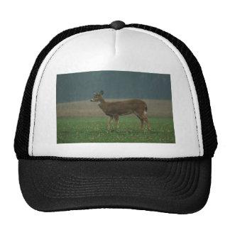 0113010-38H MESH HATS