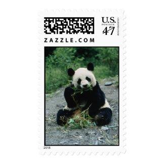 0132H001(Panda eating) Postage Stamp