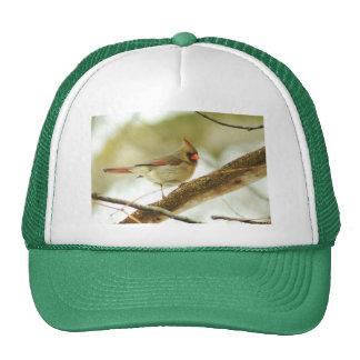 022810-16-AH MESH HATS