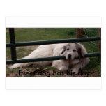 022_2, cada perro tiene su día postal