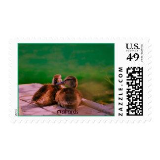 02310004, patos silvestres sellos