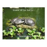 03-21-10 246, playa de Ormond, la Florida, Soakin  Postales