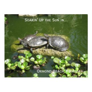 03-21-10 246, playa de Ormond, la Florida, Soakin Tarjetas Postales