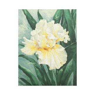 0434 Cream Iris Wrapped Canvas Print