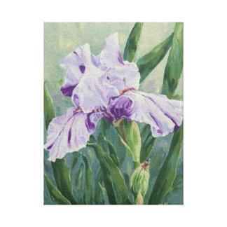 0440 Purple Streaked Iris Wrapped CanvasPrint Canvas Print