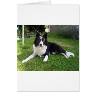 059border collie greeting cards