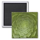 0648 Lotus verdes Iman De Frigorífico