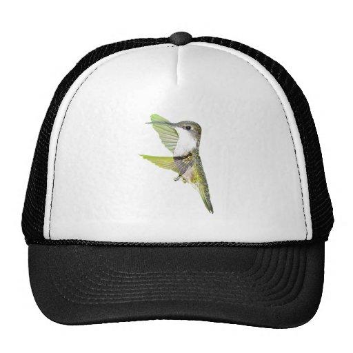 07-20-06 Hummingbirds0033ac Gorro