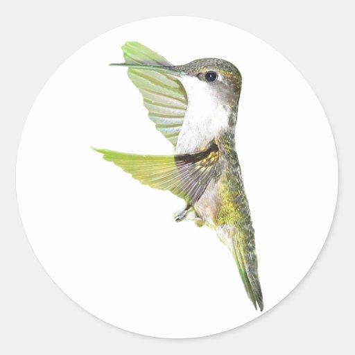 07-20-06 Hummingbirds0033ac Round Sticker