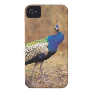 0 3 Case-Mate iPhone 4 CASE