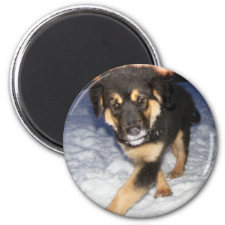 0silly_dog magnet