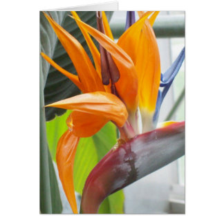 100_0344BIRD OF PARADISE GREETING CARD