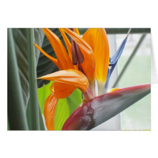 100_0344BIRD OF PARADISE STATIONERY NOTE CARD