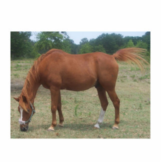 100_0536  horse standing photo sculpture
