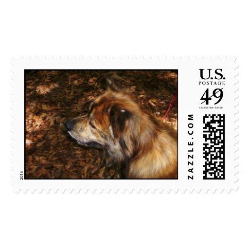 100_0791-zaz stamps