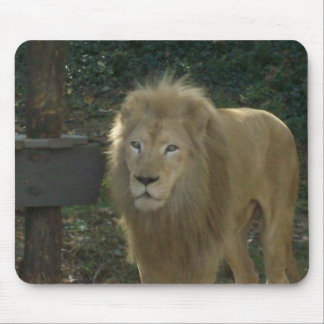 100_1582 MOUSE PAD