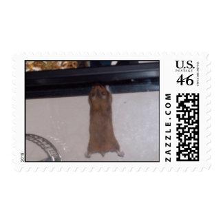 100_2655 - Super Hamster - Stamp