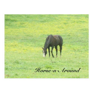 100_2701,               Horse-n-Around Postcard