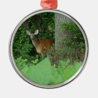 100_3076.JPG Photographed whitetail deer in field Metal Ornament