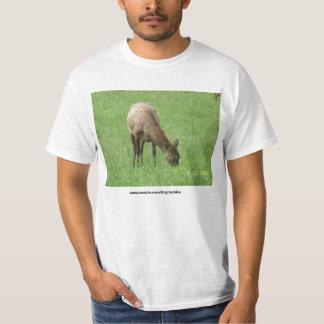 100_3518, www.zazzle.com/tlcgraphics shirt