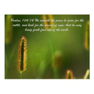 104:14 de los salmos él causeth la hierba a crecer postales