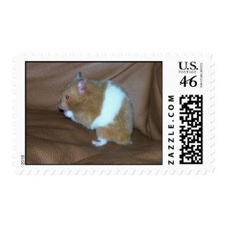 104 - Hamster Postage Stamp