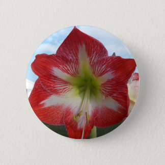 106a Amaryllis red and white MegaStar2 Button